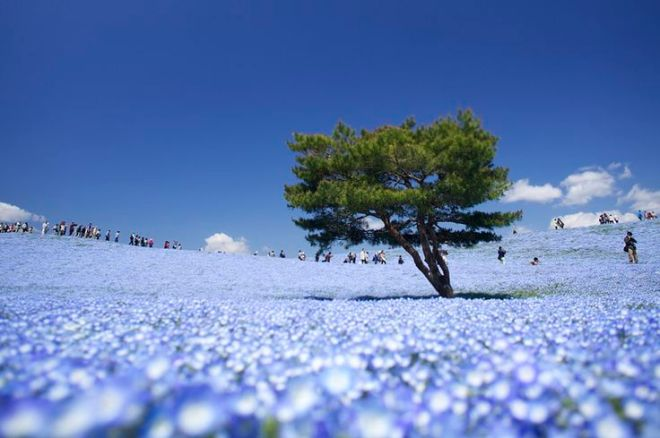 Hitachi Seaside Park, Hitachinaka, Ibaraki, Japon 1