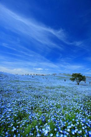 Hitachi Seaside Park, Hitachinaka, Ibaraki, Japon 2