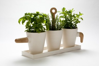 Cultiver des herbes aromatiques chez soi 08