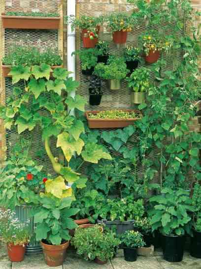 mur-vegetal-jardin-idee-pot-de-fleurs-rangement