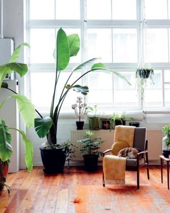 Des idées pour mettre des plantes dans sa maison