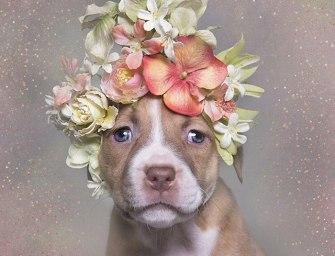 Des pittbulls et des fleurs pour lutter contre les idées reçues