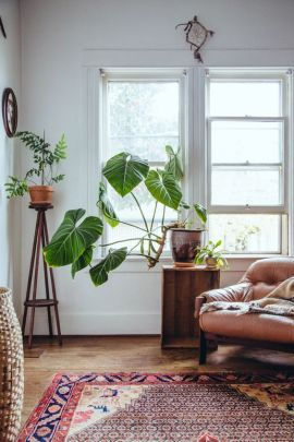 Philodendron 03