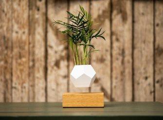 LYFE : Des plantes qui défient la gravité