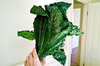 Le kale, un chou aux multiples vertus