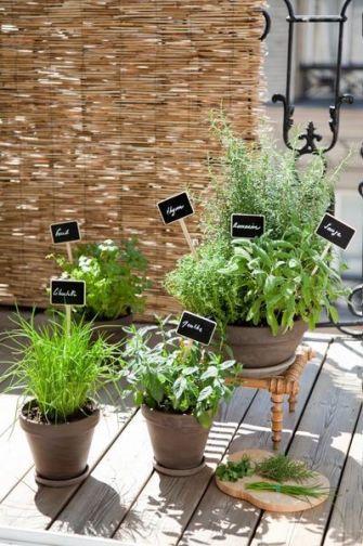 Tailler les plantes aromatiques pour favoriser leur développement
