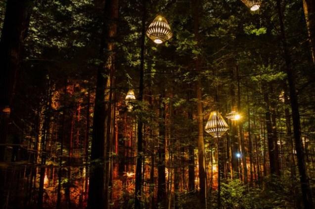 redwoods-nightlights-11-tt-width-620-height-412-lazyload-0-crop-1-bgcolor-000000-except_gif-1-qazy-1-nolayzr-1