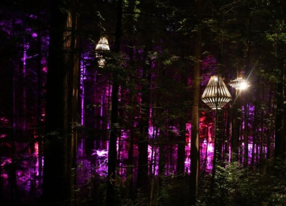 redwoods-nightlights-12-tt-width-620-height-446-lazyload-0-crop-1-bgcolor-000000-except_gif-1-qazy-1-nolayzr-1