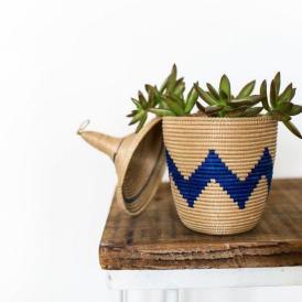 plantes-grasses-dintérieur-cache-pot-original