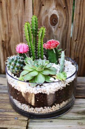 plantes-grasses-dintérieur-cactées-fleuries-magnifiques