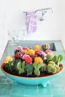 plantes-grasses-dintérieur-cactus-fleuris-dans-un-bol-céramique-peint-vert
