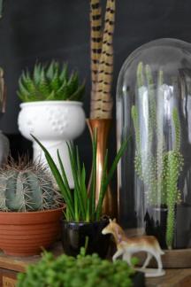 plantes-grasses-dintérieur-décoration-intérieure-plantes-grasses
