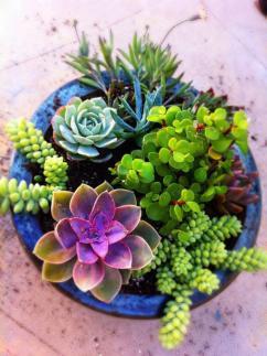 plantes-grasses-dintérieur-décoration-mignonne-avec-plantes-succulentes