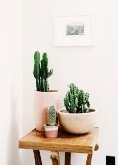 plantes-grasses-dintérieur-décorer-avec-la-plante-grasse
