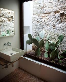 plantes-grasses-dintérieur-idée-déco-fantastique-castus-dans-la-salle-de-bain