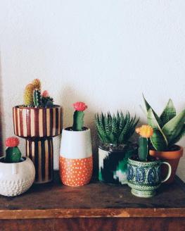 plantes-grasses-dintérieur-les-cactus-et-les-succulentes