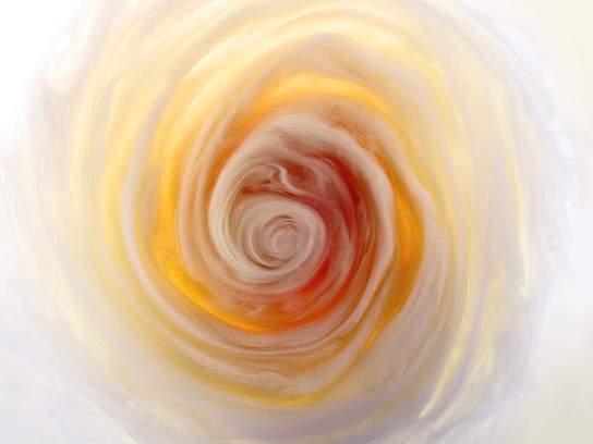 flowers-and-swirls-Mark-Mawson-12