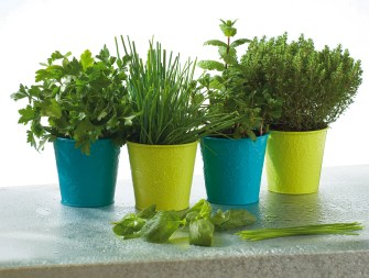 Quelle plante aromatique cultiver en intérieur ?