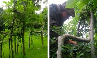 Angleterre : A la rencontre du jardinier qui fait pousser des chaises