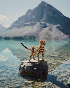 Suki le chat qui voyage 01