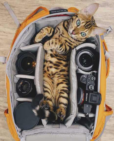 Suki le chat qui voyage 05