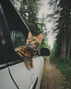 Suki le chat qui voyage 07
