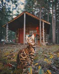 Suki le chat qui voyage 10
