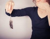 Comment protéger votre maison des souris naturellement ?