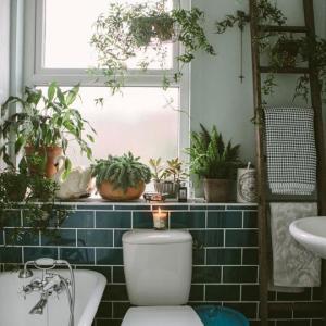 des-plantes-vertes-sur-le-rebord-de-la-fenetre