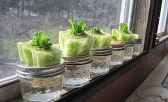 10 légumes à faire pousser dans sa cuisine à partir des restes
