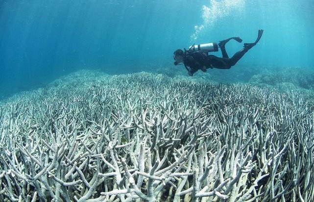 Les scientifiques coralliens se mobilisent pour sauver les récifs du monde entier