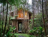 Dreamy Tropical Tree House : Une cabane nichée en pleine forêt à Hawaii