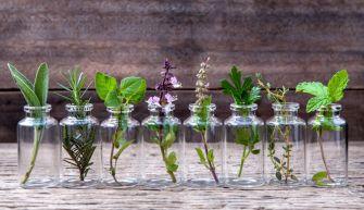 Comment faire pousser des plantes d'intérieur dans l'eau ?