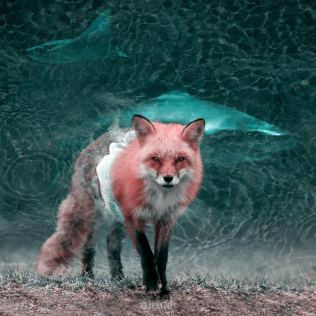 Julien-Tabet-animaux-surrealistes_17