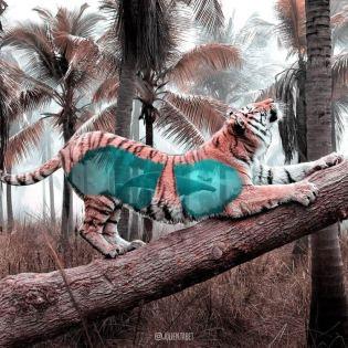 Julien-Tabet-animaux-surrealistes_7