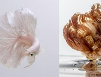Cette photographe thaïlandaise capture des images de poissons d'aquarium comme personne d'autre