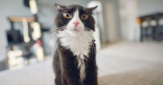 DIY : Comment faire un répulsif pour chat maison ?