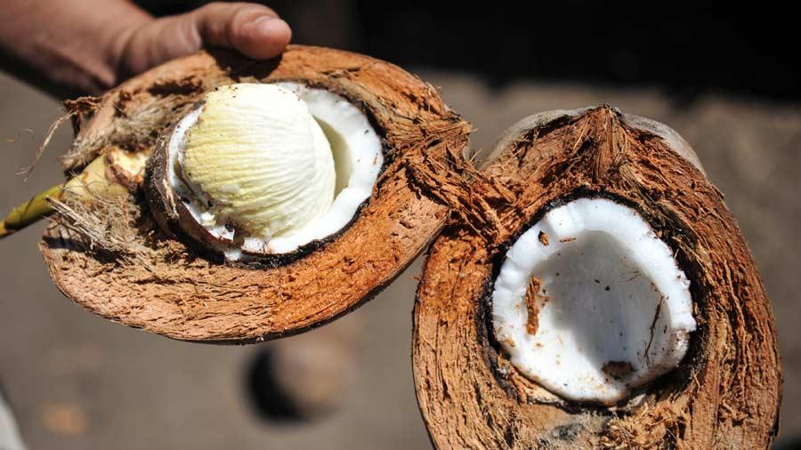 Les bienfaits étonnants de l'embryon de noix de coco connu sous le nom de » uto»
