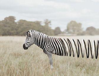 37 Photos surréalistes réalisées par Zulkarnain Ismail : un défi logique et naturel