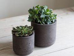 Comment faire des pots en ciment pour vos succulentes ?