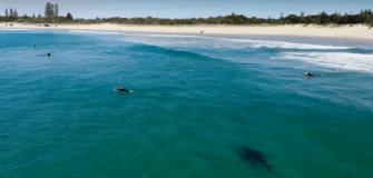 En Australie un requin blanc filmé tout près de surfeurs