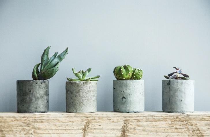 succulents-care