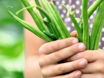 Planter des haricots verts : quelques conseils pratiques