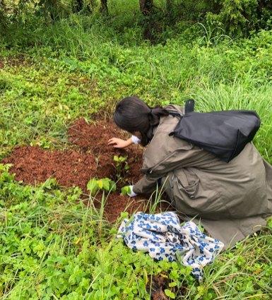 350-million-trees-planted-record-green-legacy-ethiopia-5d415f06e635b__700