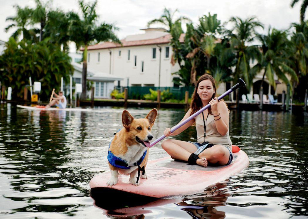 corgi-on-a-paddleboard-1-1200×853