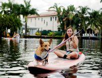 Airbnb propose aux voyageurs du monde entier des expériences éthiques avec les animaux.