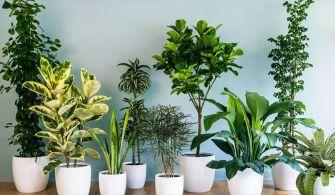 Vous vous sentez stressé ? Essayez ces 5 plantes d'intérieur !