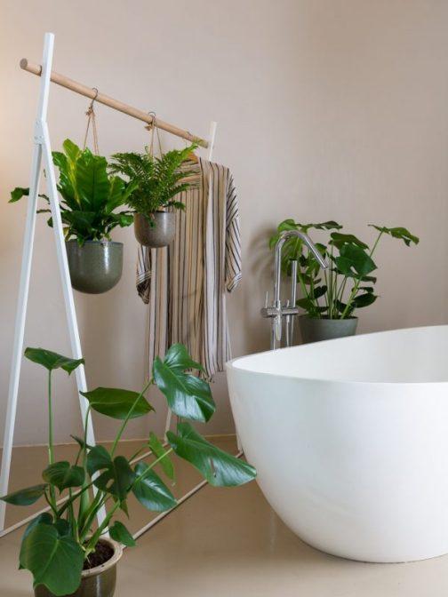 plantes-salle-de-bains-600x800