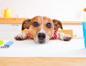 Les aliments à ne jamais donner à votre chien !