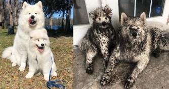 Quand nos chiens nous font sourire